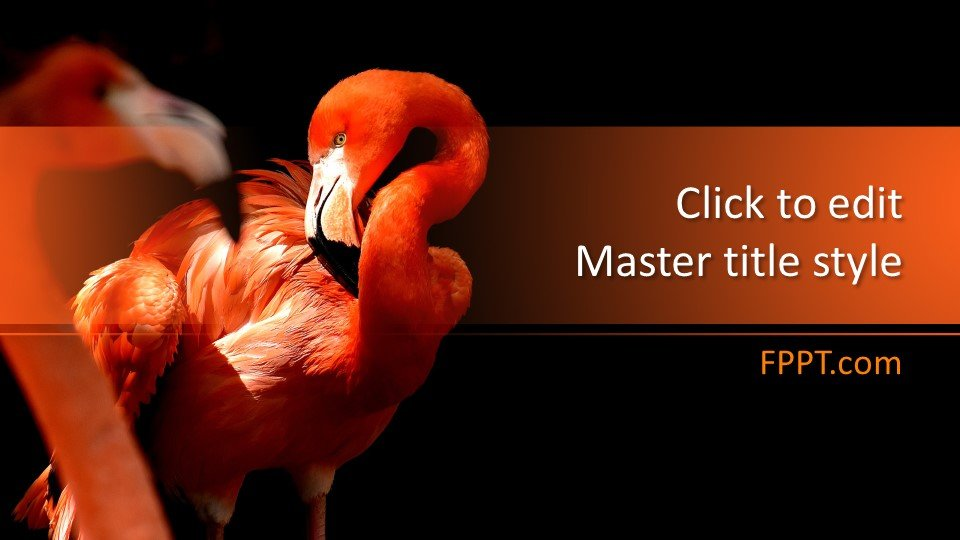 Powerpoint Flamingo - Шаблоны слайдов Powerpoint - Фламинго