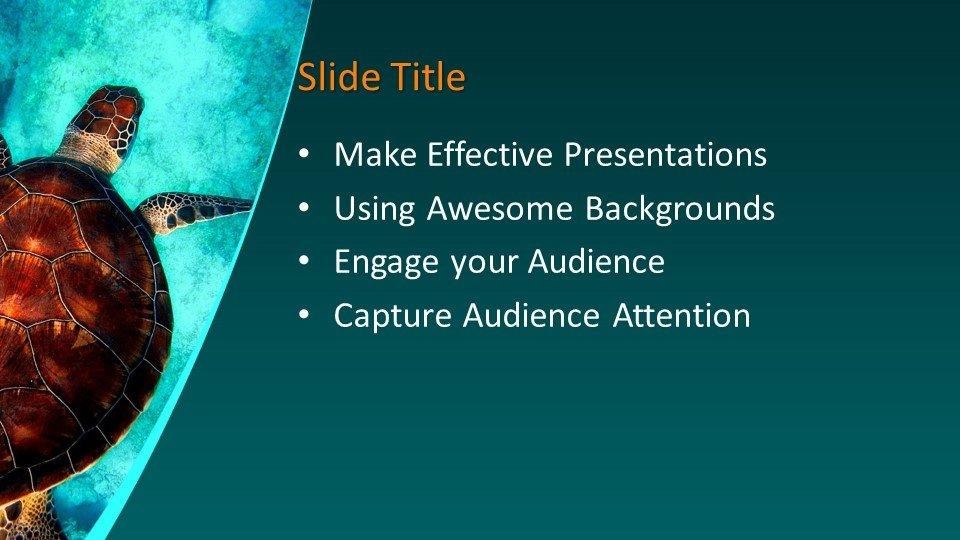 Шаблоны слайдов Powerpoint - Морская черепаха