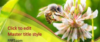 Powerpoint - Пчела