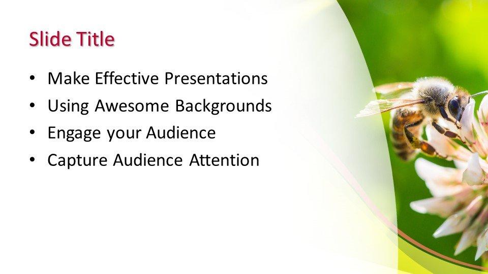 Шаблоны слайдов Powerpoint - Пчела