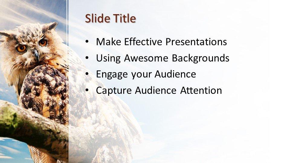 Шаблоны слайдов Powerpoint - Сова